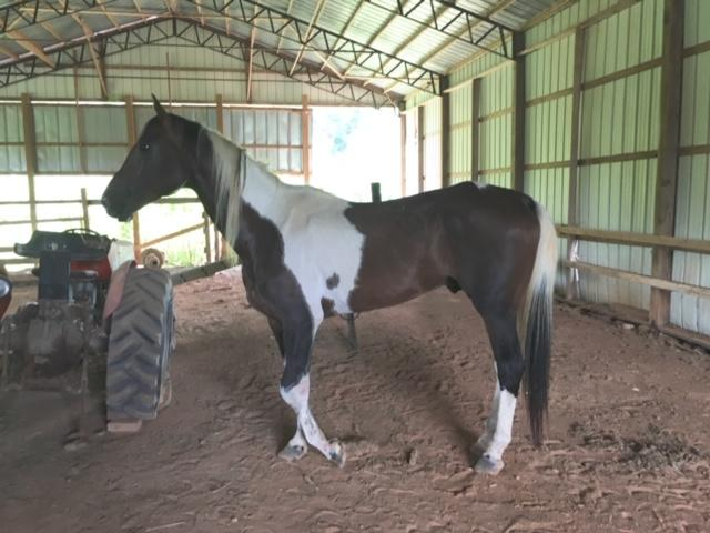 Save the Horses Horse Rescue-Human Rescue - Save the Horses  Welcome
